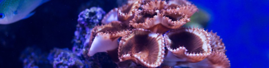 Coral 2