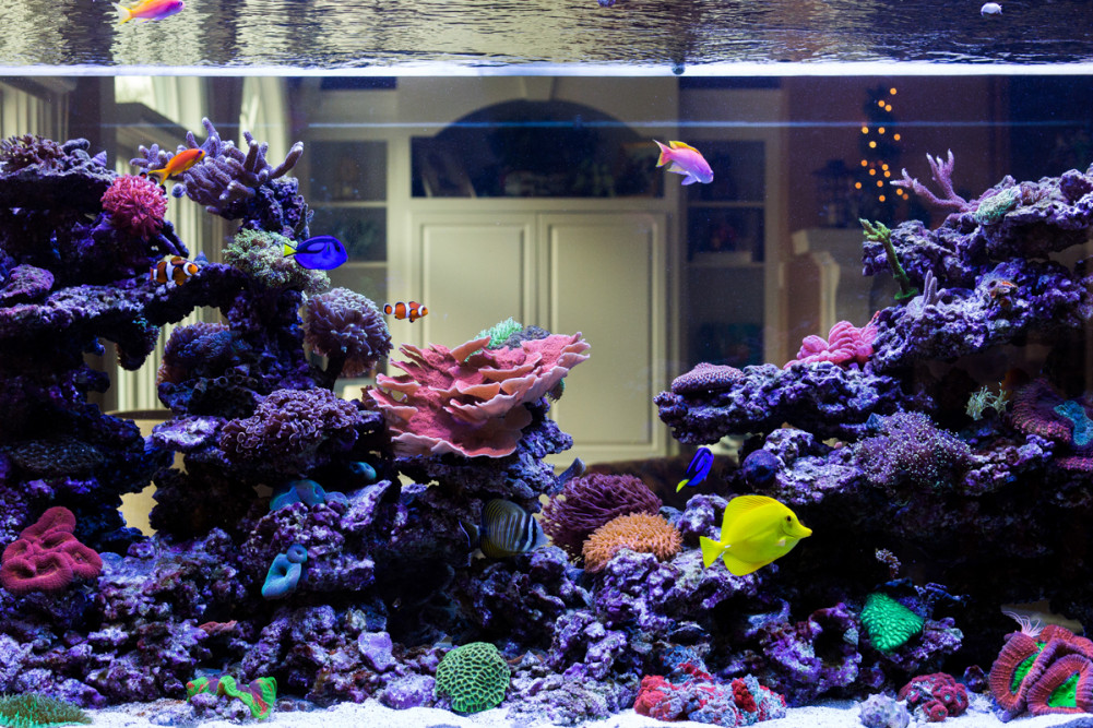 300 Gallon Double-Sided Reef