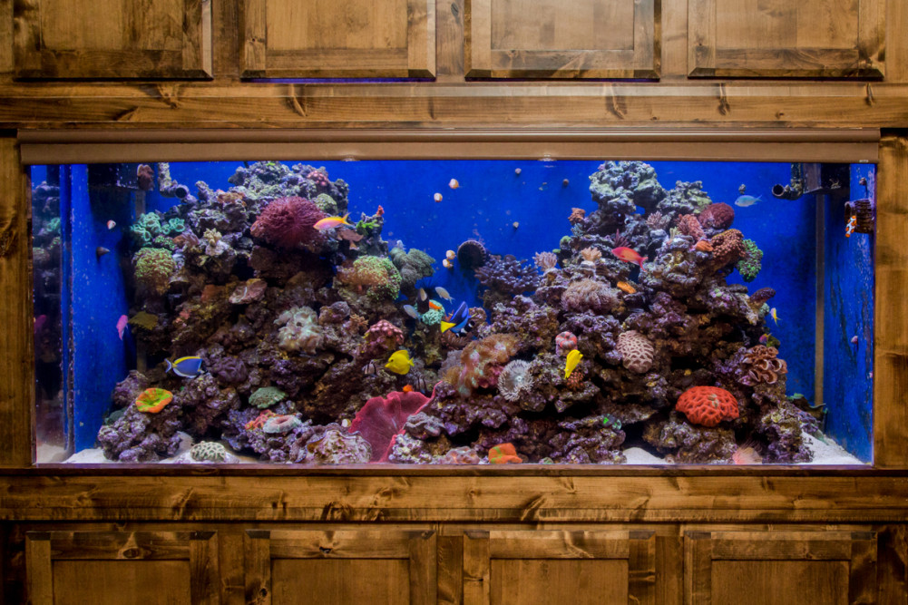 600 Gallon Built-In Reef