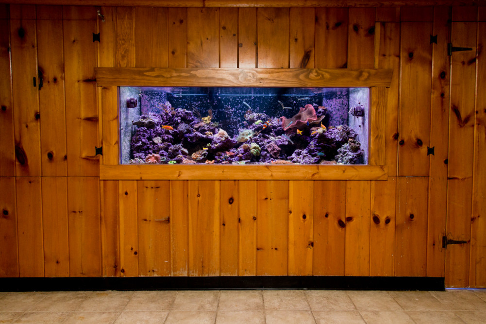 300 Gallon In-Wall Reef